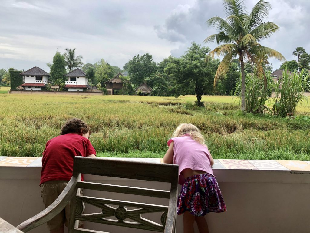 The kids checking out the rice terraces at our first lunch